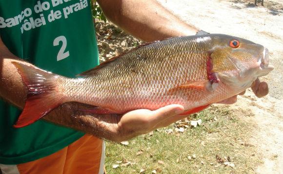 Cultivo de Peixes Marinhos 2